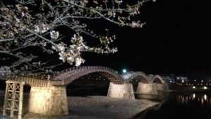 錦帯橋 夜桜