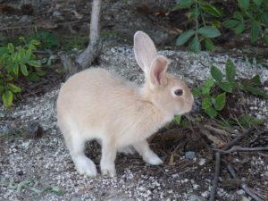 ウサギ横顔