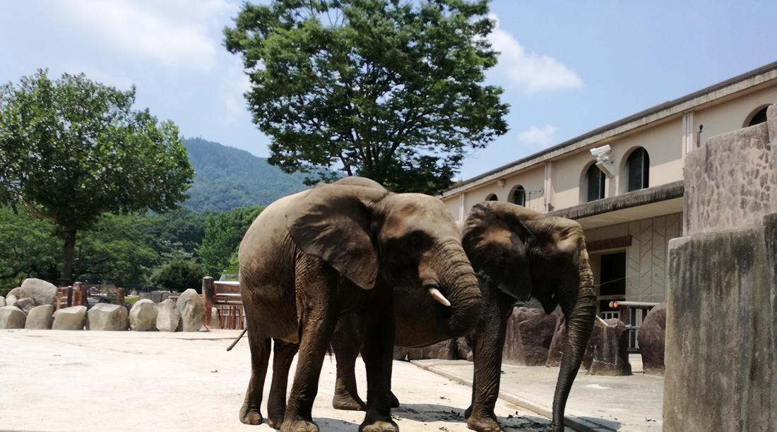 安佐動物公園の象