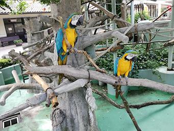 安佐動物公園のオウム