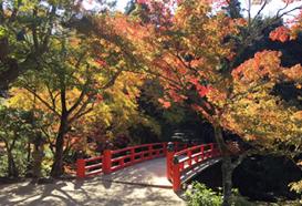 宮島の紅葉と赤い橋
