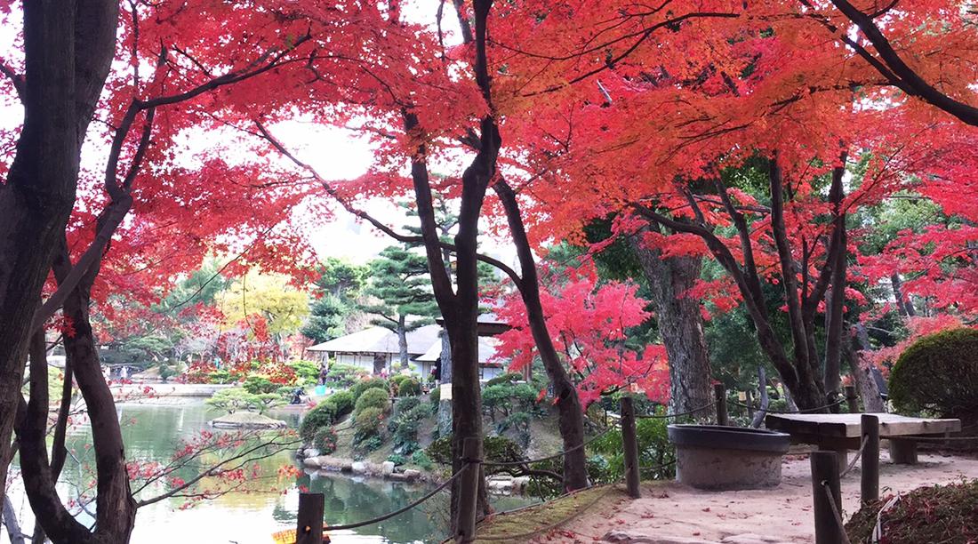 紅葉の時期の縮景園